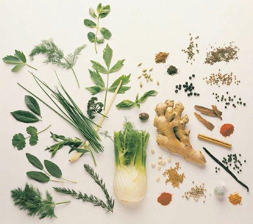 male breast enlargement herbs